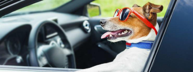 Håll hunden säker under bilresan
