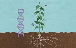 Design a Set of Mechanical Genes