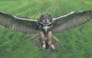 Control a Microraptor's Flight