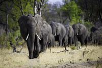 Zimbabwe sells 100 elephants to China...