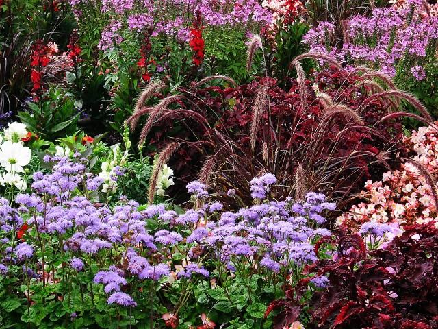 Gartengestaltung Gräser Arten Tipps