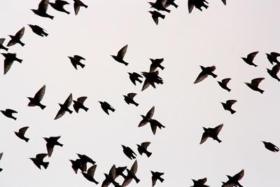 vogelabwehrsysteme effektiv gegen die vogelplage. Black Bedroom Furniture Sets. Home Design Ideas
