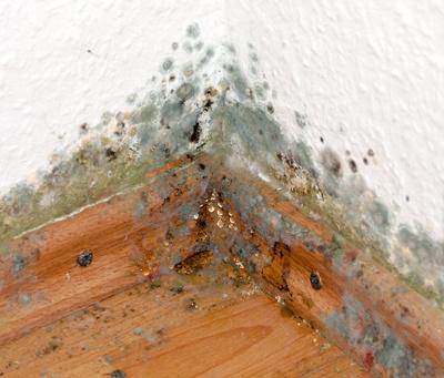 Grüner Schimmel An Der Wand : schimmel an der wand gefahr f r ihre gesundheit ~ A.2002-acura-tl-radio.info Haus und Dekorationen