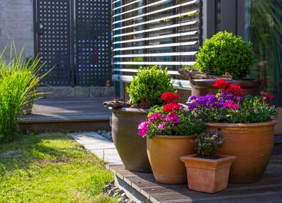 exklusive gestaltungstipps f r ihre terrassenbepflanzung. Black Bedroom Furniture Sets. Home Design Ideas