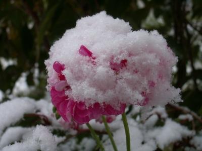 Pflanzen Winterfest Machen Hier Gibt Es Tipps
