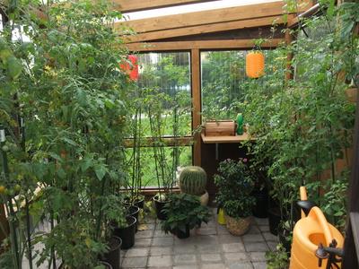 ein kleines gew chshaus erleichtert die aufzucht von exotischen pflanzen. Black Bedroom Furniture Sets. Home Design Ideas