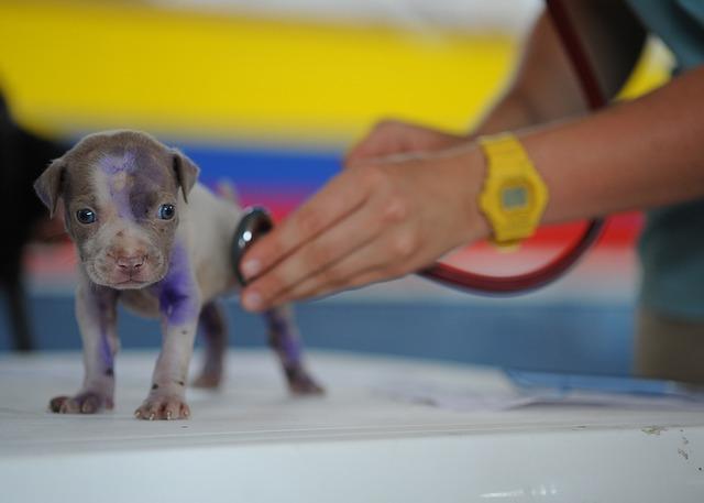 Tierarzt24 - Der Blog!