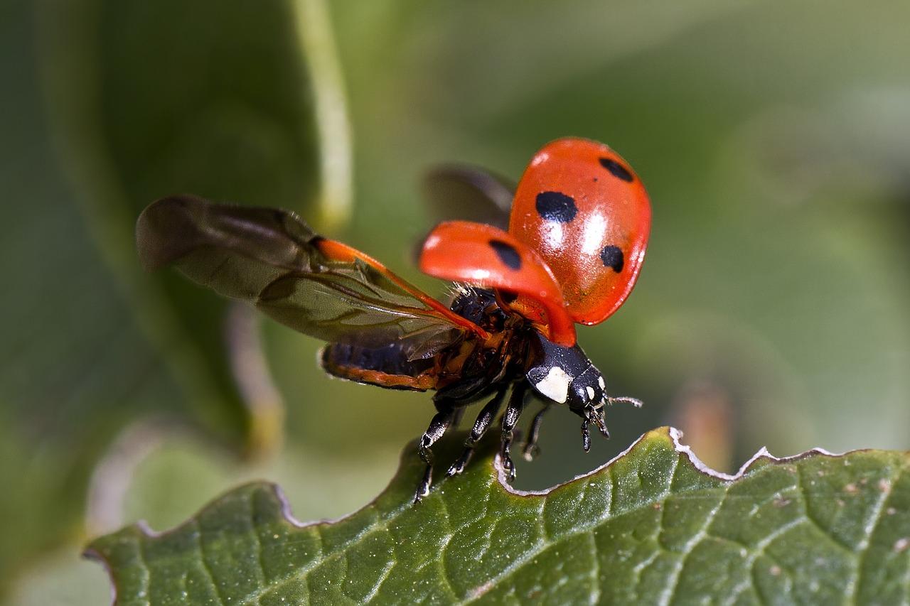 So Bestimmen Sie Käfer