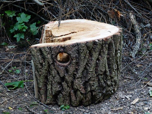 Baumfällung Voraussetzungen Vorgehen Kosten