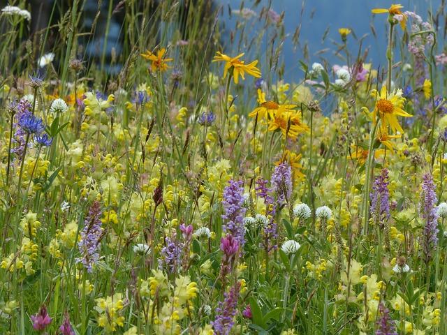 So Wird Der Naturgarten Richtig Geplant