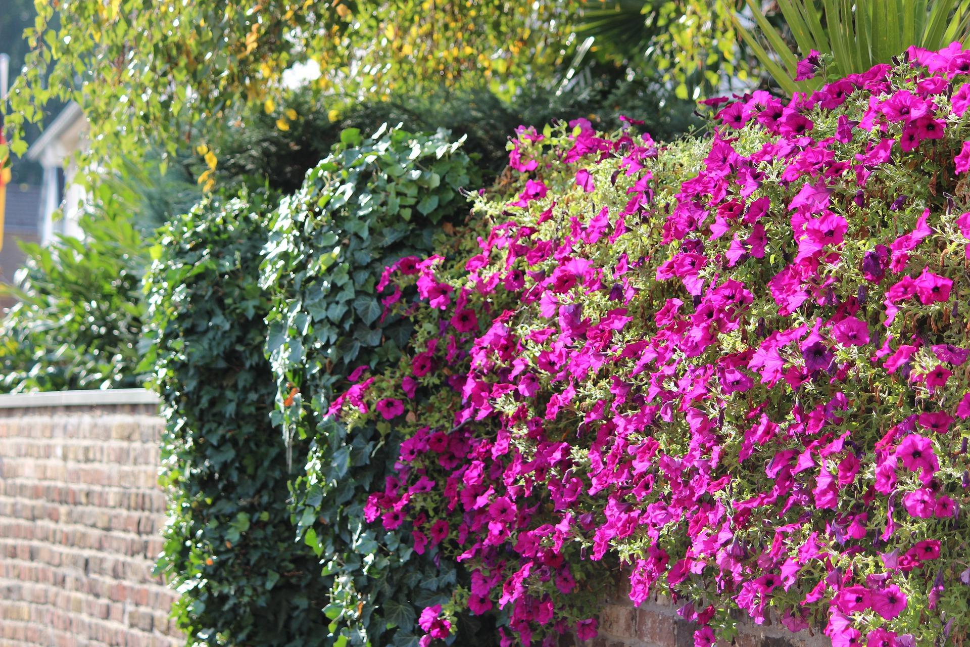 originelle ideen für die bepflanzung der gartenmauer