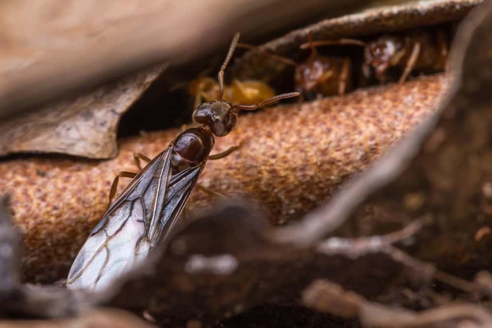 fliegende ameisen bek mpfen wann und wie. Black Bedroom Furniture Sets. Home Design Ideas