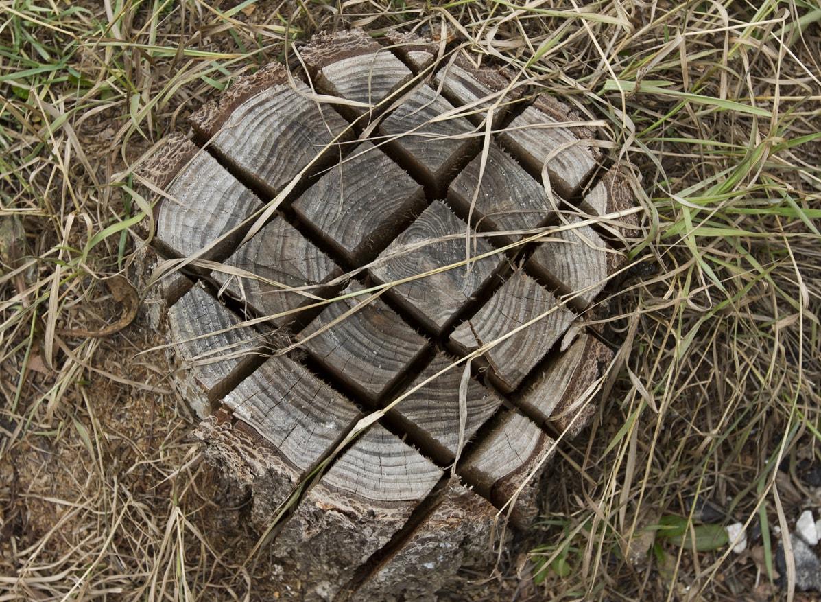 Außergewöhnlich Baumstumpf entfernen ▷ Ausgraben, Fräsen, Verrotten und Co. &HR_65