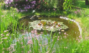 Gartenteich Reinigen So Wird S Gemacht