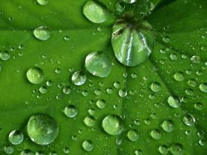 Der Lotuseffekt schützt auch Glas vor Verschmutzungen