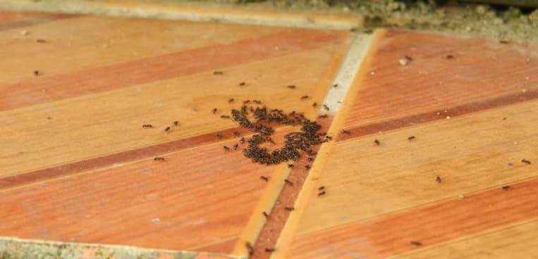 Ameisen bekämpfen: Ursachen, Methoden & Kosten