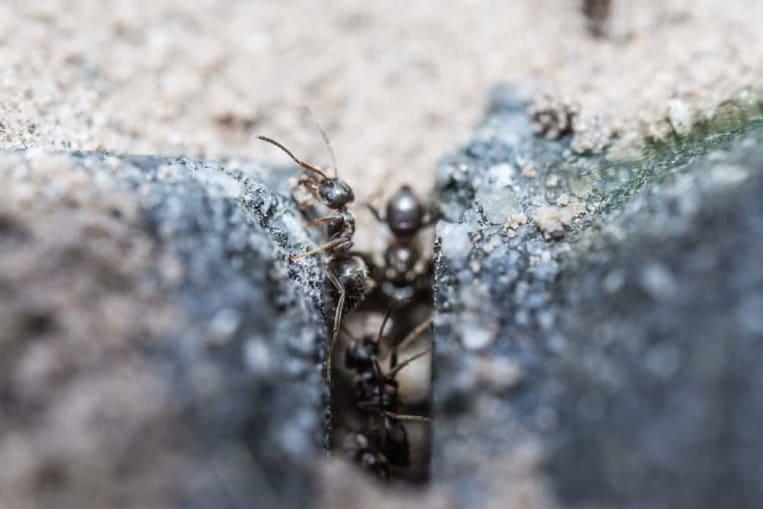 Turbo Fliegende Ameisen bekämpfen: Wann und wie? MY88