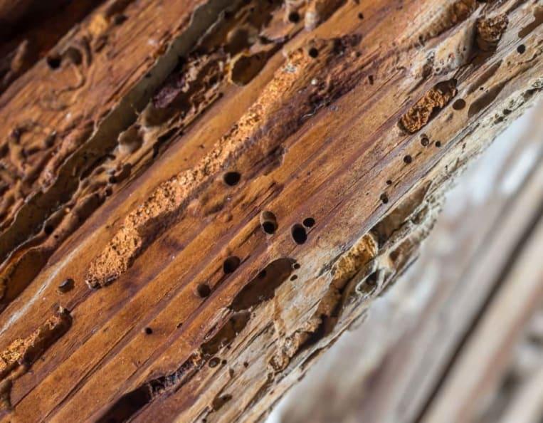Beliebt Holzwurm bekämpfen ▷ Mittel, Methoden & Kosten MJ05
