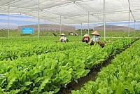 Vietnam is promoting food security...