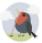 Decorative image of a bird