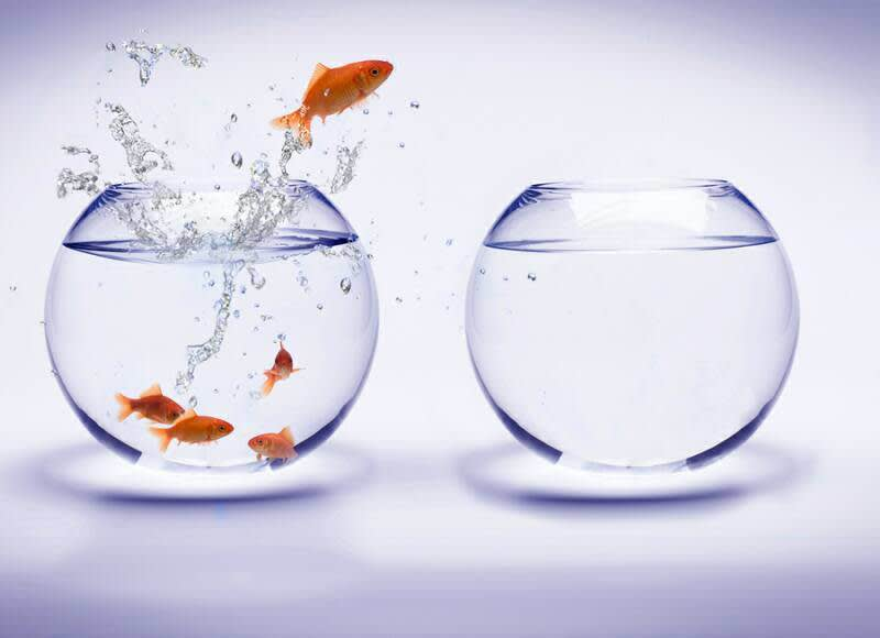 A goldfish jumping out of a bowl of fish into an empty one