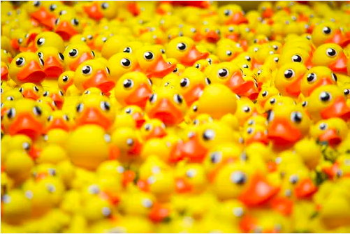 Pile of rubber ducks.