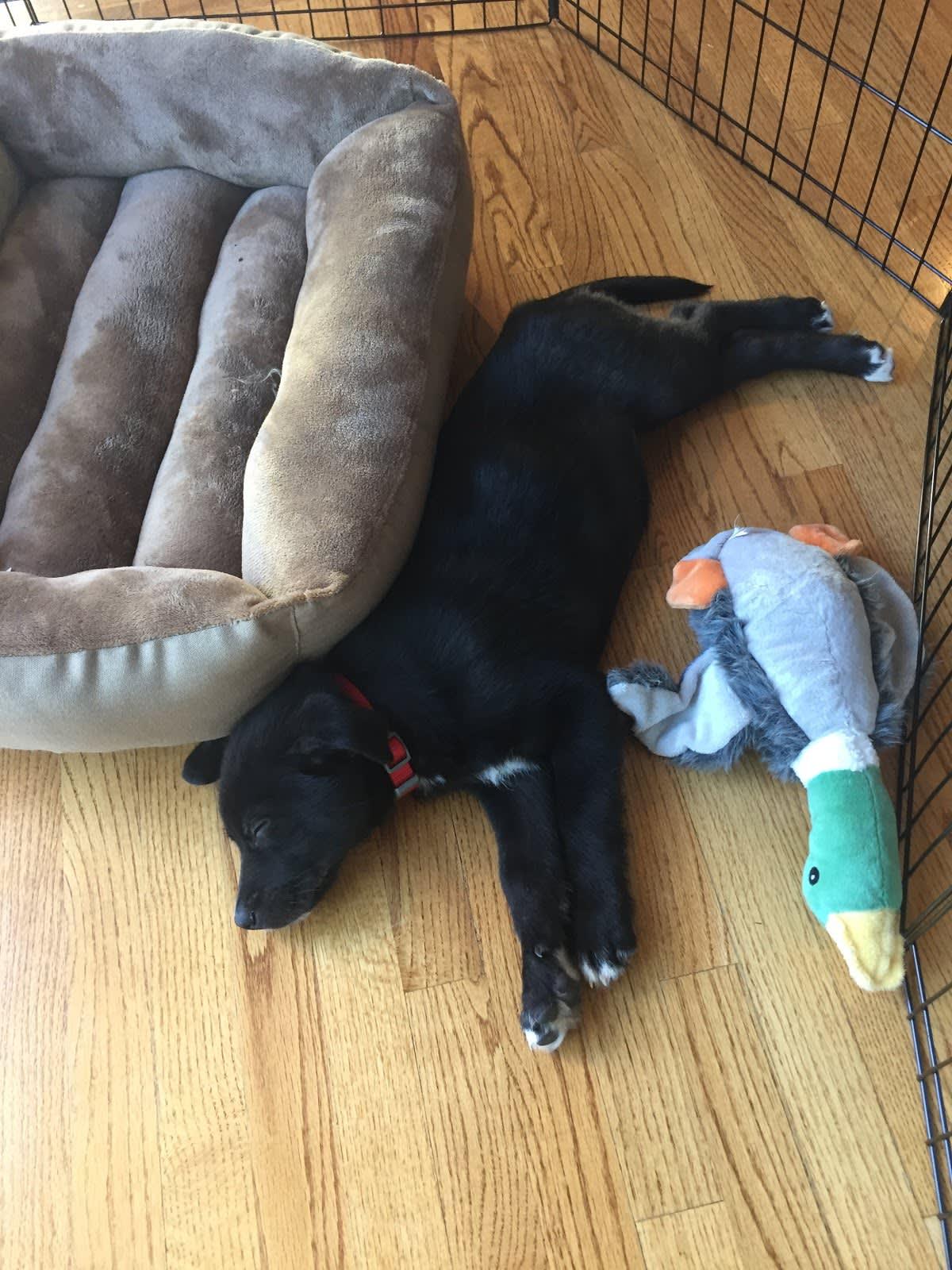 ベッドの横で寝ている仔犬の写真。