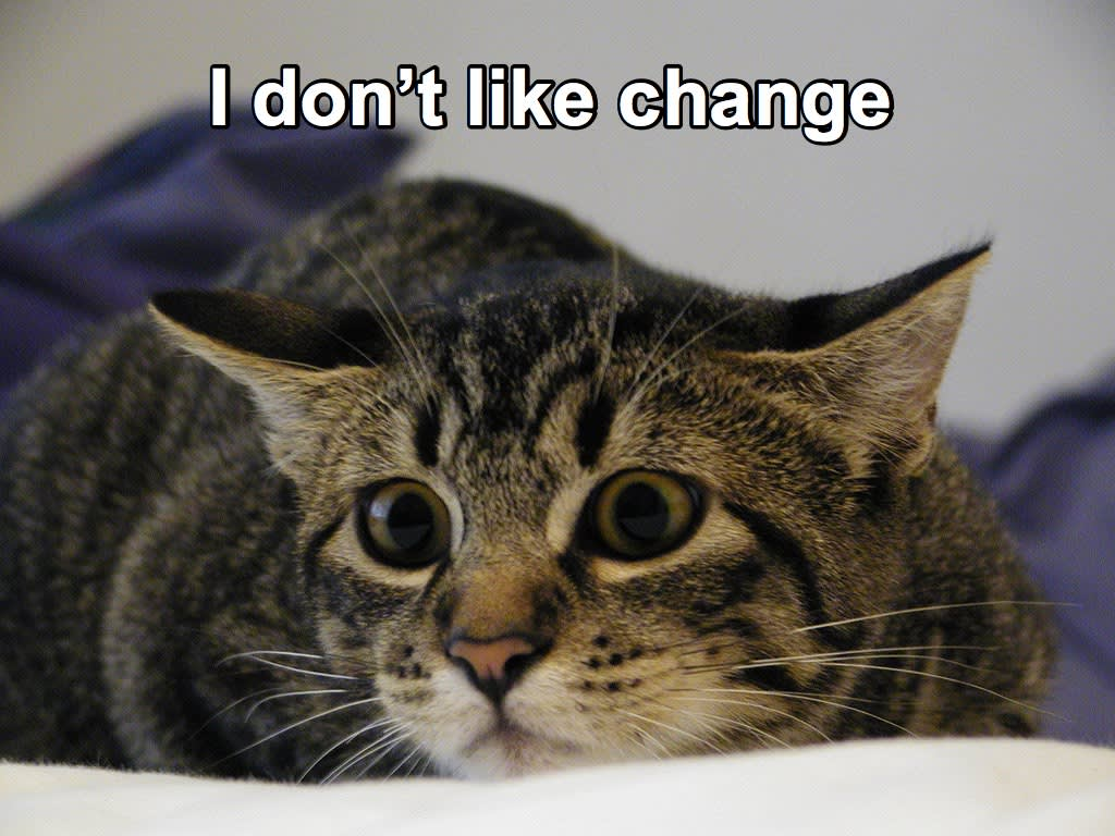 "Image of scared kitten with text, ""I don't like change"""