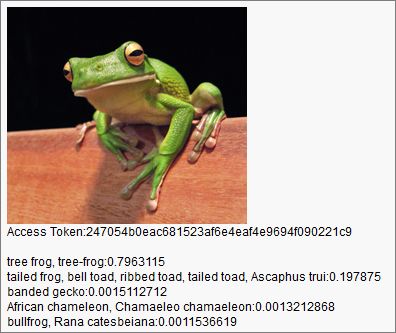 The picture of the tree frog and the prediction returned by the API.