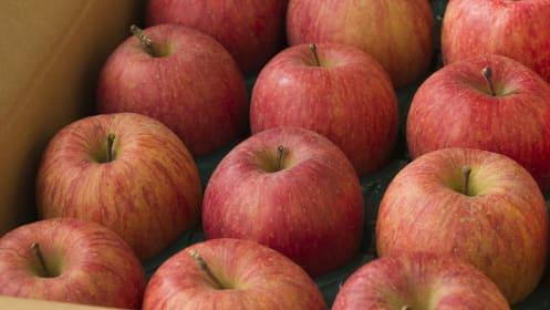 新米や旬の野菜やフルーツをメルカリで手に入れる、買う時の注意点は?