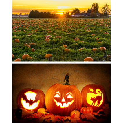 Pumpkin patch and carvings