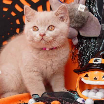 Kitten and Pumpkin