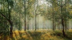 Hydrozagadka sprząta las
