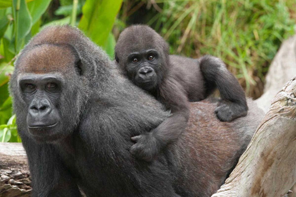 san diego zoo transportation discount tickets starline tours