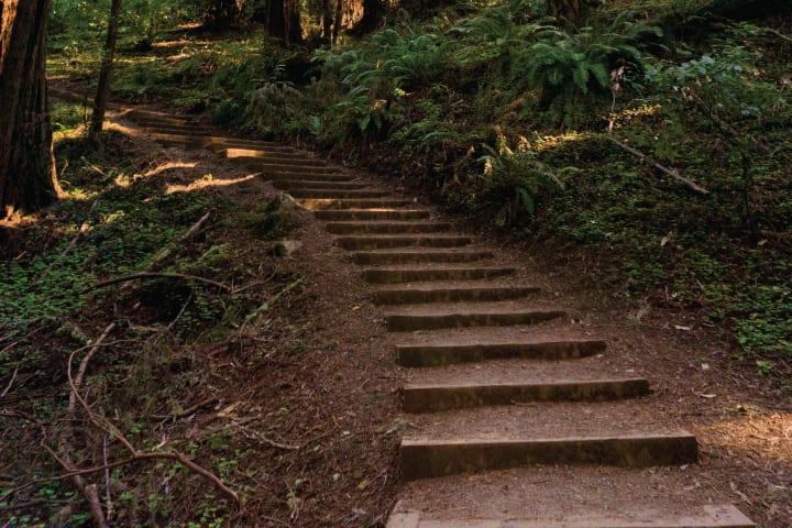 Woods4 rdtfni
