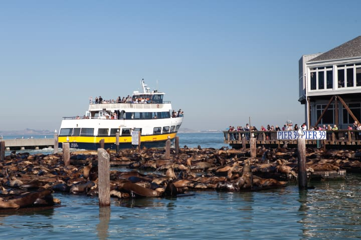 Passing the sealions