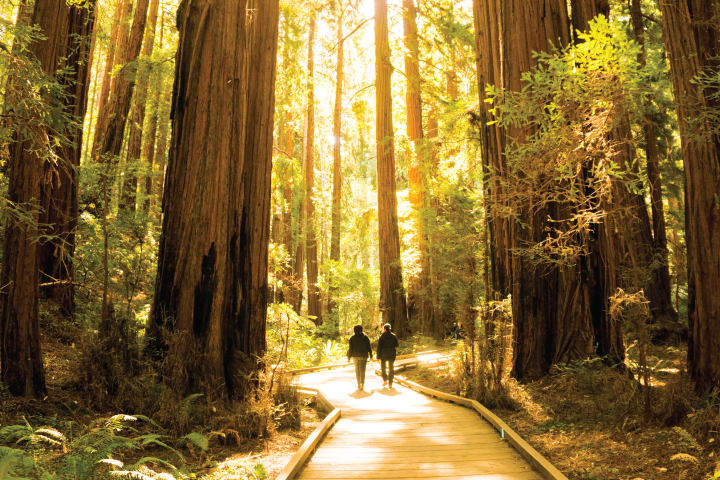 Muir Woods & Sausalito with Ferry option