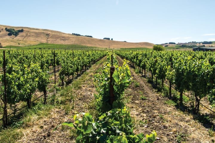 Half-day Wine Country Tour from San Francisco