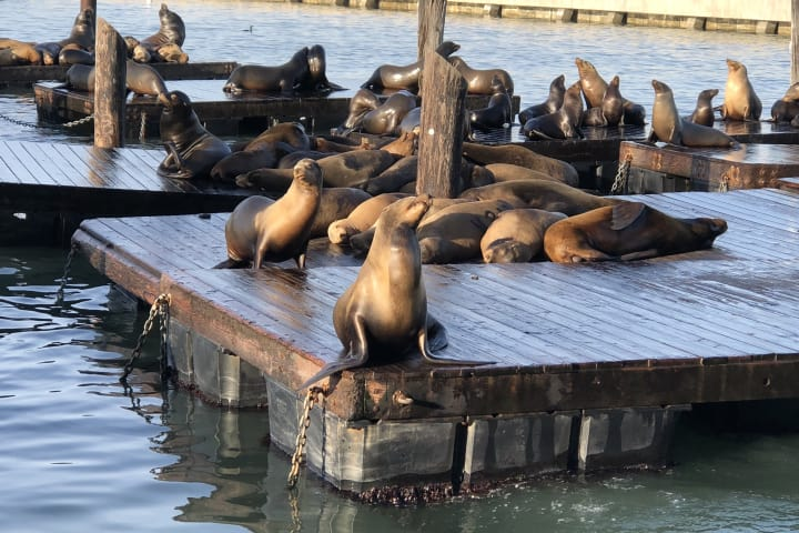 Hop-Off at Pier 39 to visit Sea lions