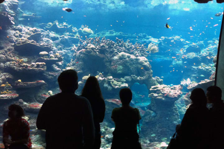 Visit Aquarium of the Bay