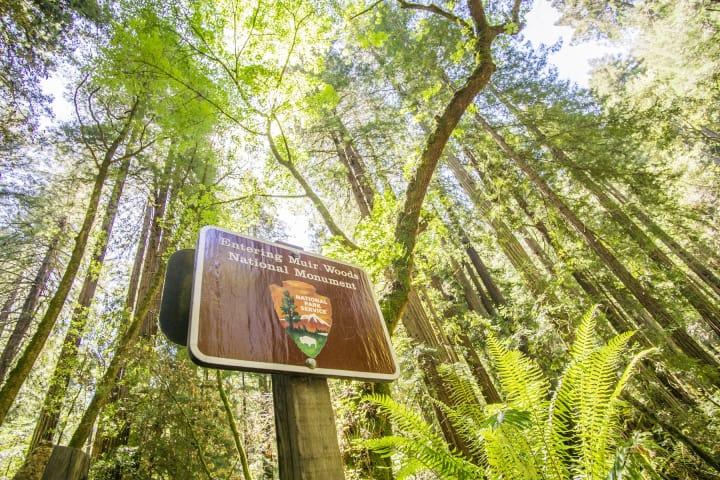 Explore Muir Woods
