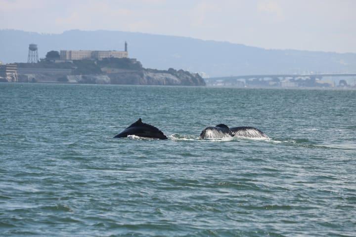 Golden Gate Whale Watch