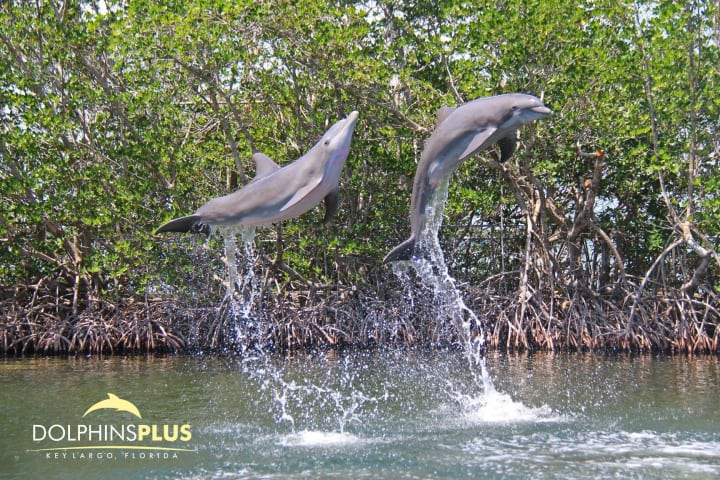 Dolphins plus 2 pi0iyh