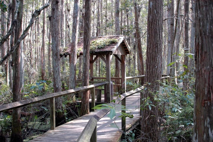 Swamp walk 1 egev2k