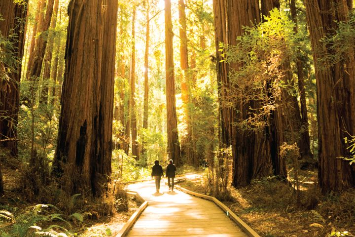Bus Tours To Muir Woods From San Francisco