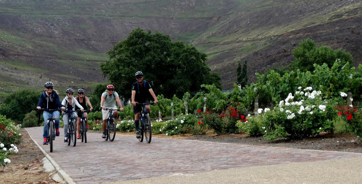Bikes 'n Wines: Winelands cycle tour