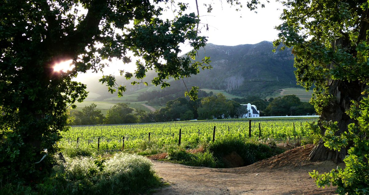Wine estate tour & tasting in Groot Constantia