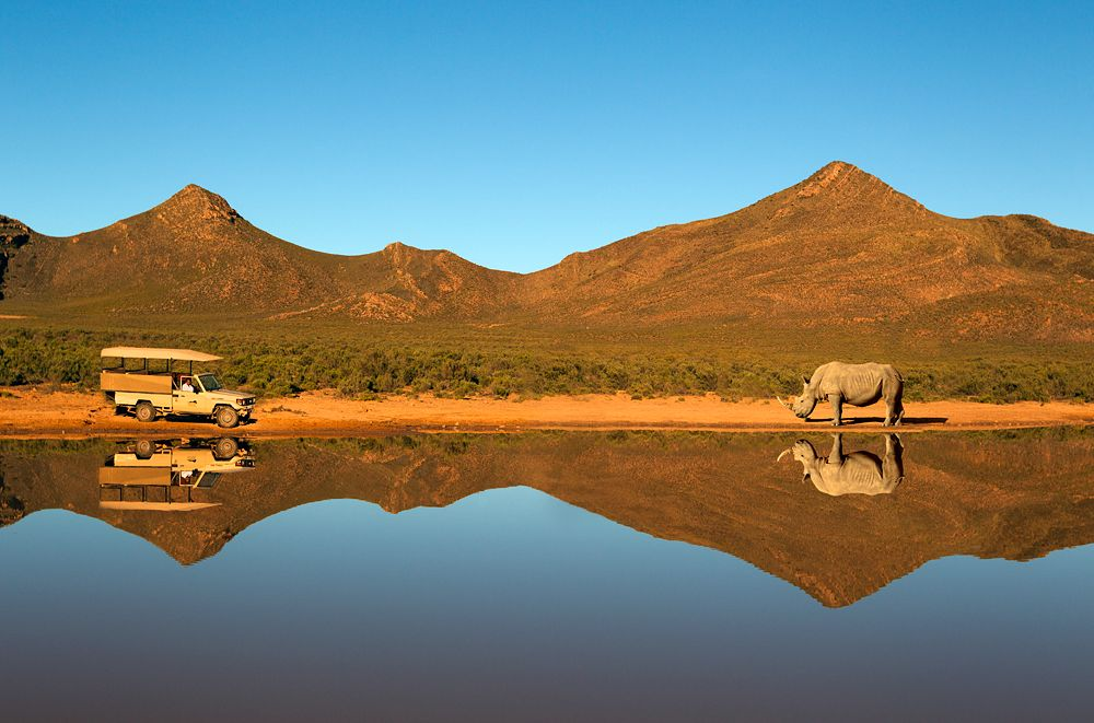Aquila Private Game Reserve Safari
