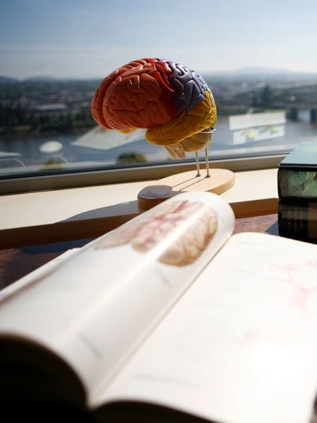 Brain model with book