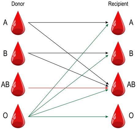 Graphic showing donor and recipients